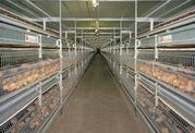 Premier Frozen And Fresh Poultry Wholesale Suppliers